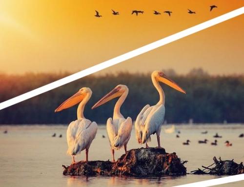 Excursie Delta Dunarii: 8 puncte de atractie de neratat